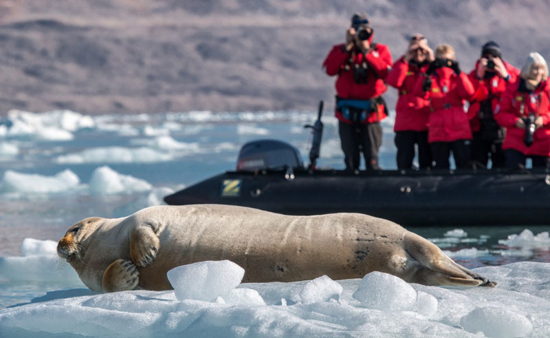 greenland zodiac excursion bearded seal pos