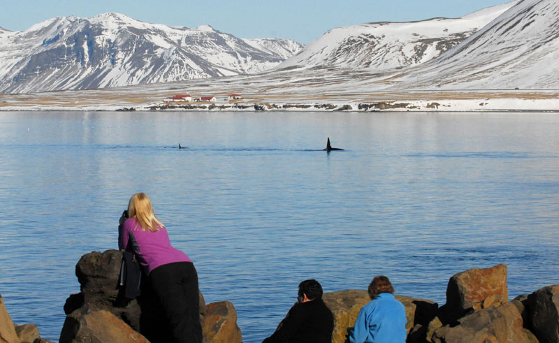 iceland grundafjordur whale watching from shore ch