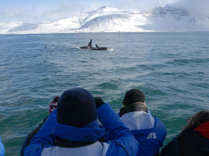 iceland grundarfjordur orca watching ch