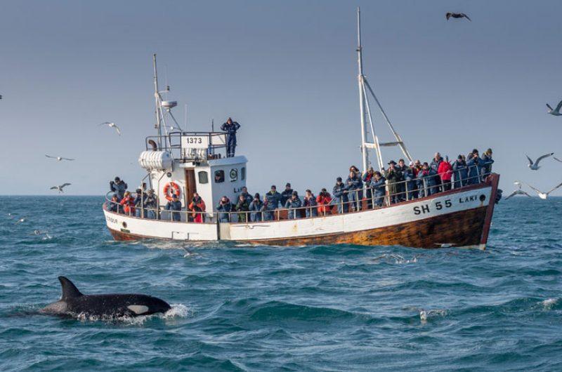 iceland grundarfjordur whale watching aboard laki rth