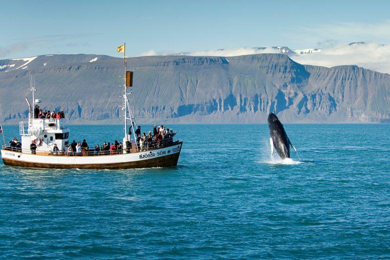 iceland north east husavik skjalfandi bay whale watch ns