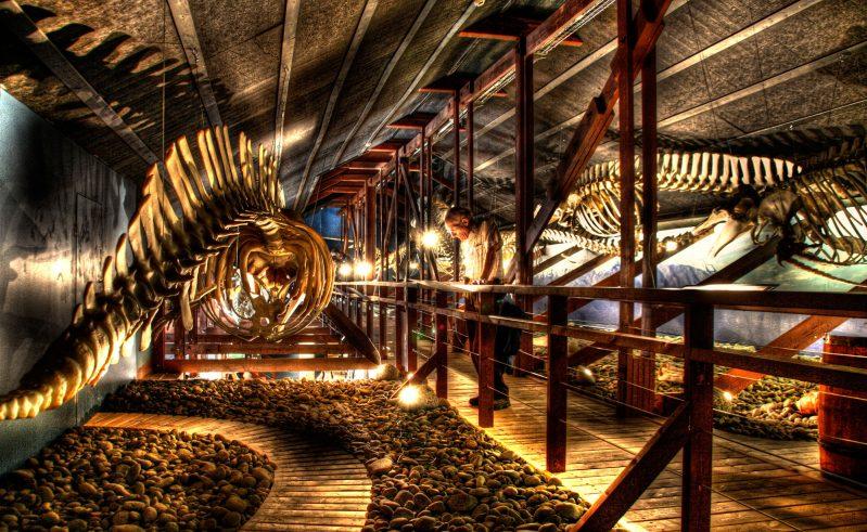 iceland north east husavik whale museum rth