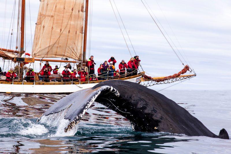 iceland north east whale watchers schooner ns