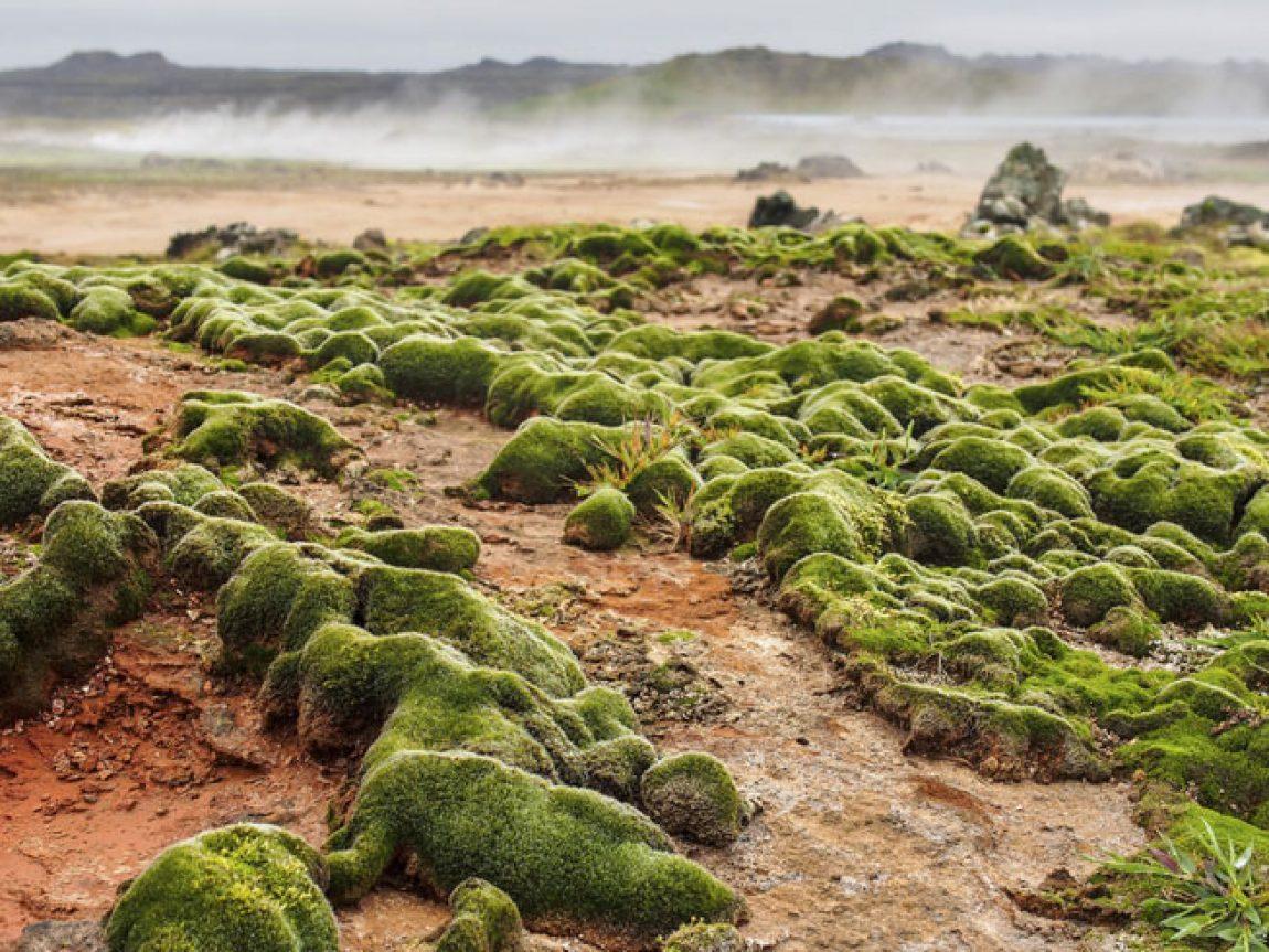 iceland reykjanes peninsula gunnuhver hot springs istock