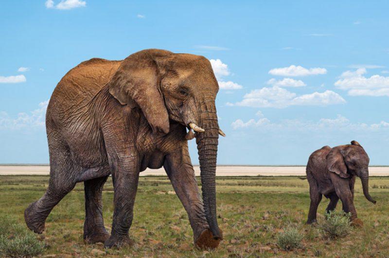 namibia damaraland desert elephants rth