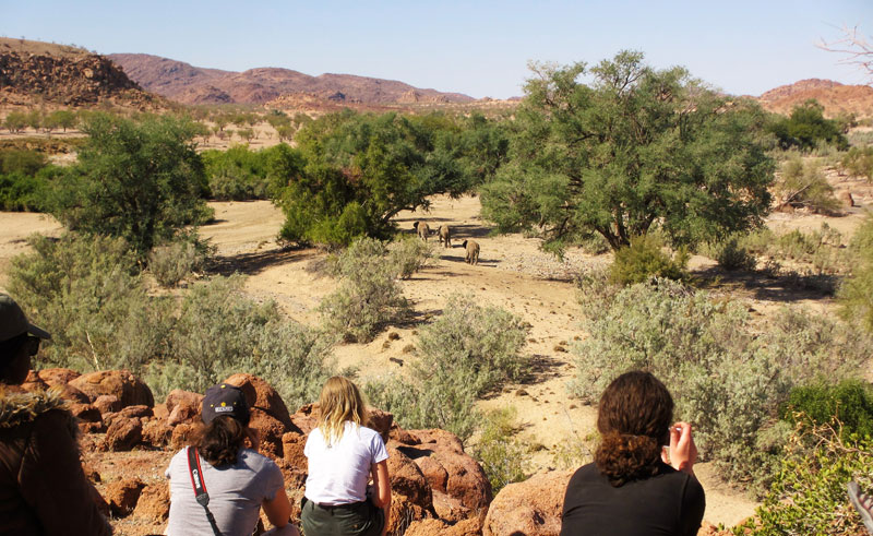 namibia damaraland ozondjou trails elephant watch ntat