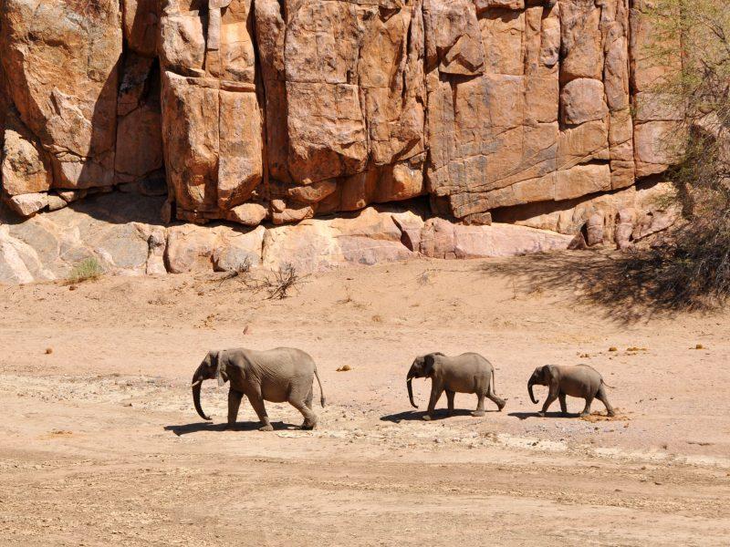 namibia damaraland ozondjou trails elephants ntat 1