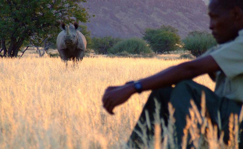 namibia damaraland rhino tracking ntat