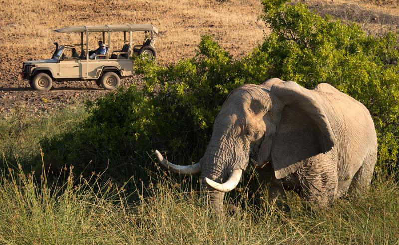 namibia desert rhino elephant game drive