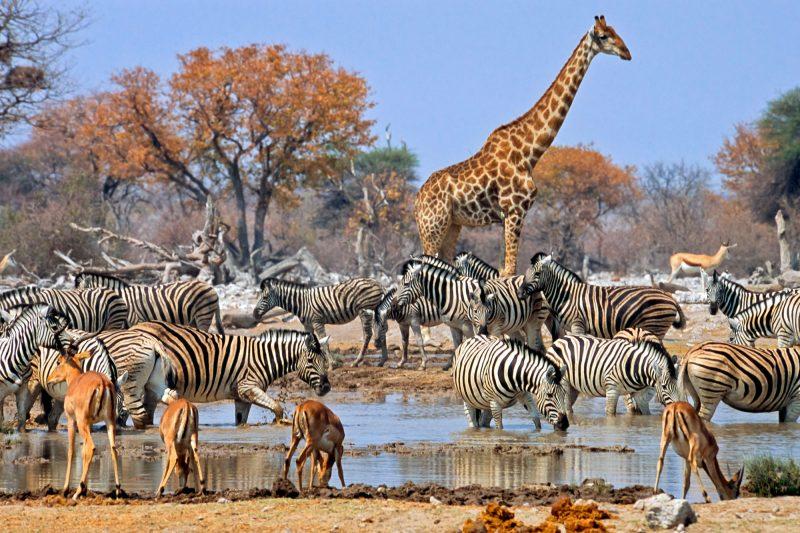 namibia etosha national park wildlife istk