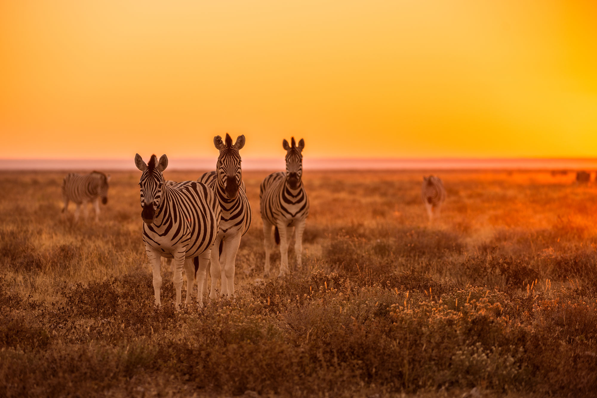 namibia etosha zebra sunrise istk 1