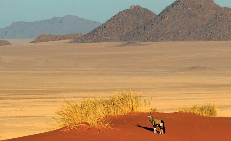 namibia namibrand nature reserve wolwedans oryx
