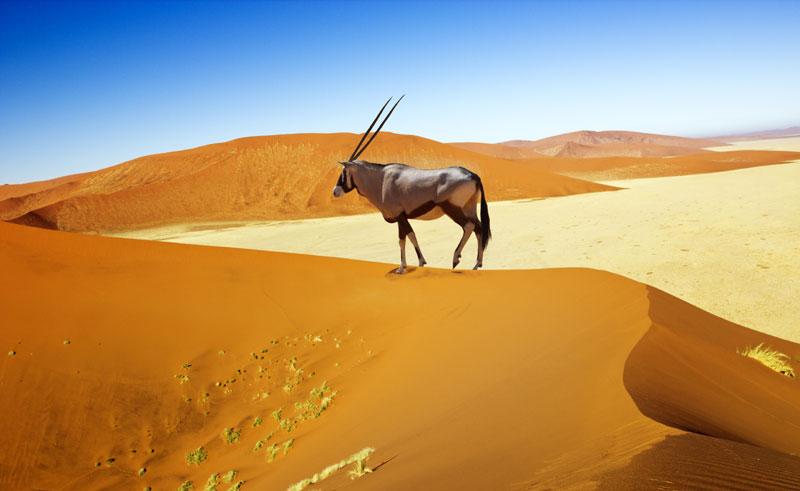 namibia sossusvlei dunes oryx istock