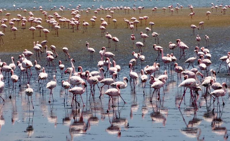 namibia walvis bay lagoon flamingoes gt
