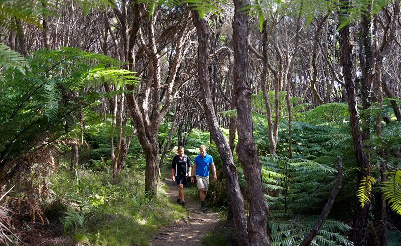new zealand abel tasman walking track tnz