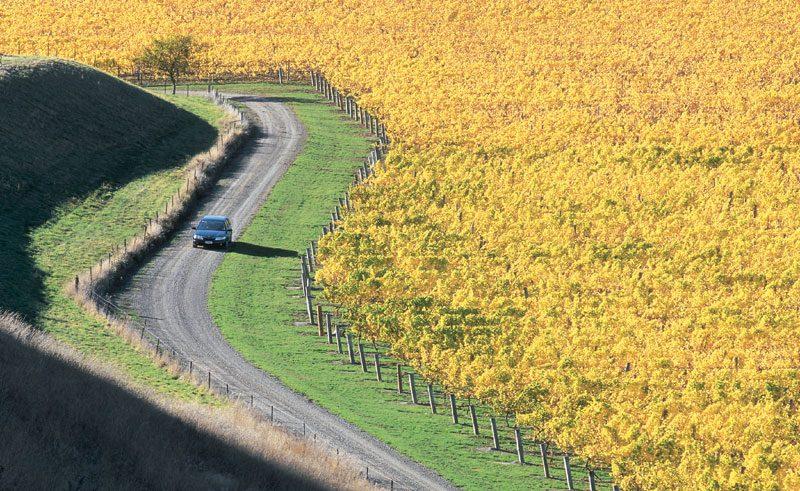 new zealand driving through vineyards sc