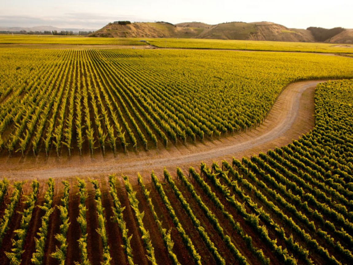 new zealand hawkes bay vines tb