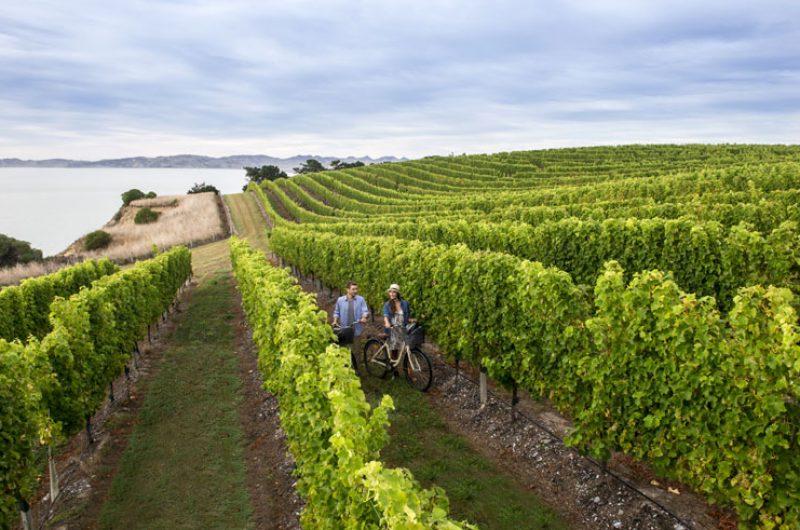 new zealand marlborough vineyard cycling