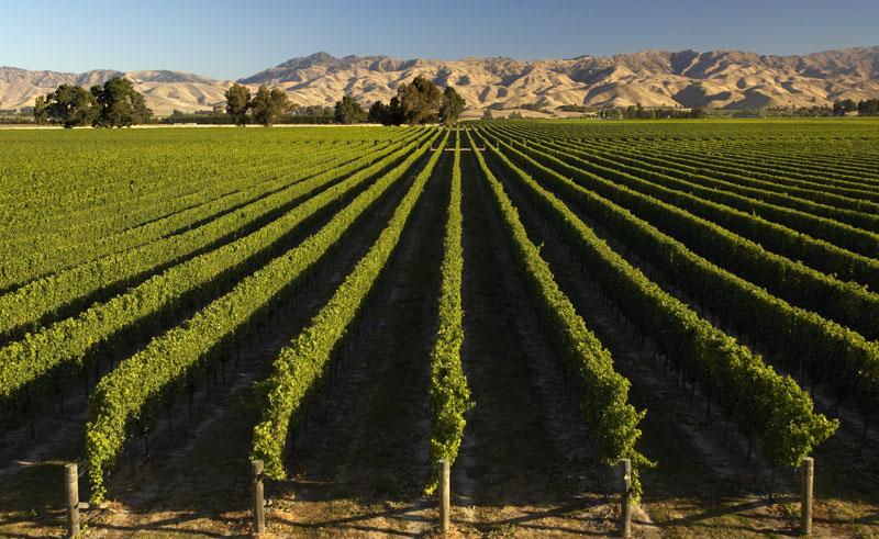 new zealand marlborough winery vines dm