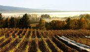 new zealand otago alexandra vineyard