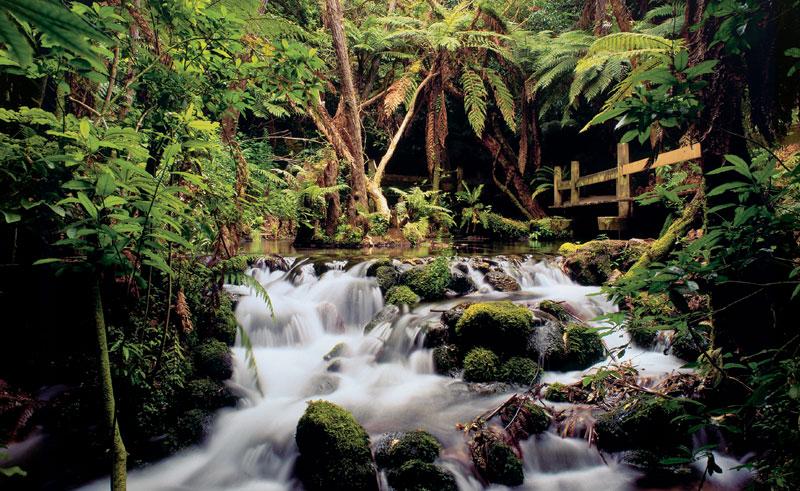 new zealand rotorua rainbow springs waterfall dr
