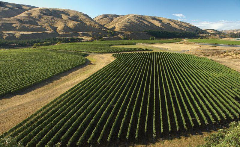 new zealand wairarapa martinborough vineyard tnz