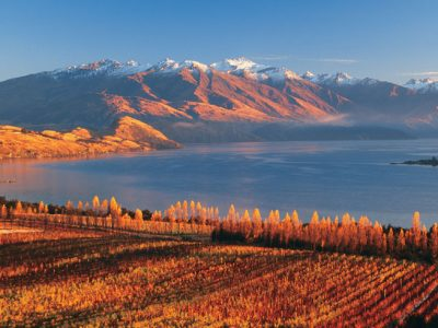 new zealand wanaka rippon vineyard autumn tnz