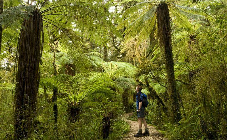 new zealand west coast kahurangi national park twc