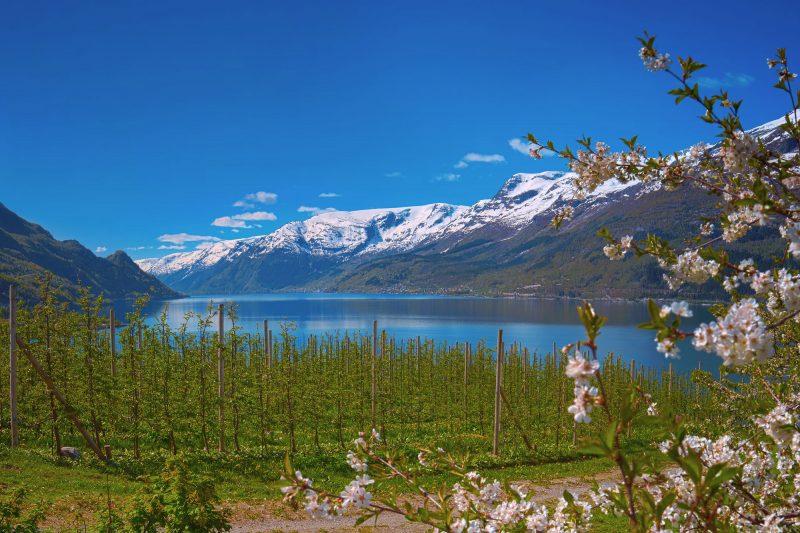 norway fjords hardangerfjord lofthus blossom istk m
