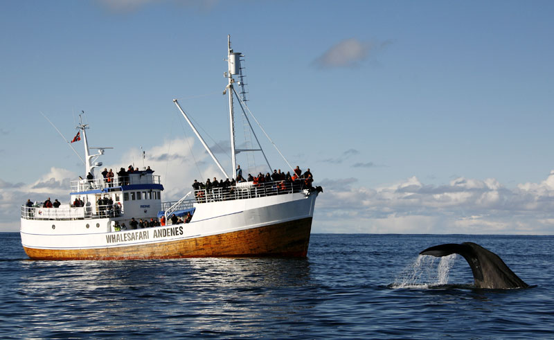 norway vesteralen whale watching boat aws