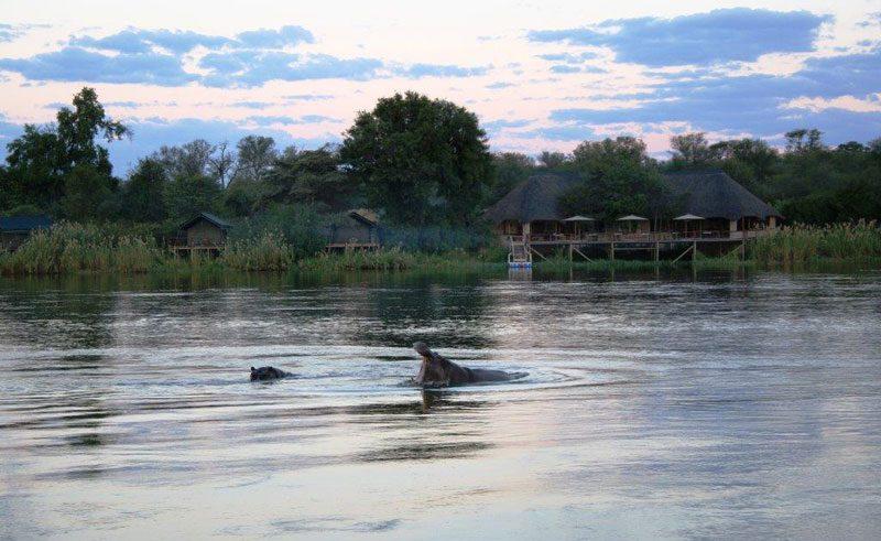 nunda river lodge hippo