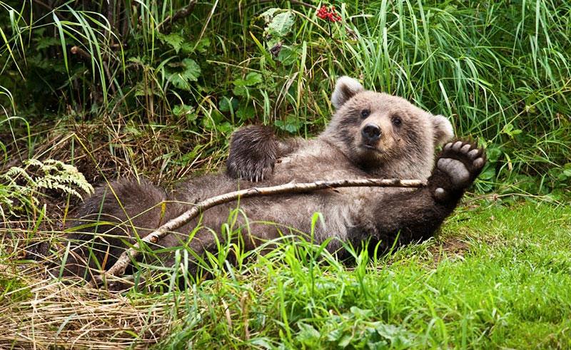 redoubt bay lodge bear
