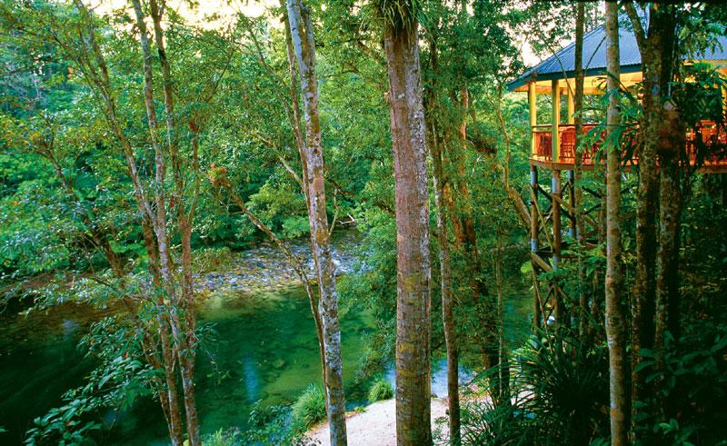 silky oaks lodge jungle perch
