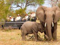 south africa kruger national park elephants dul
