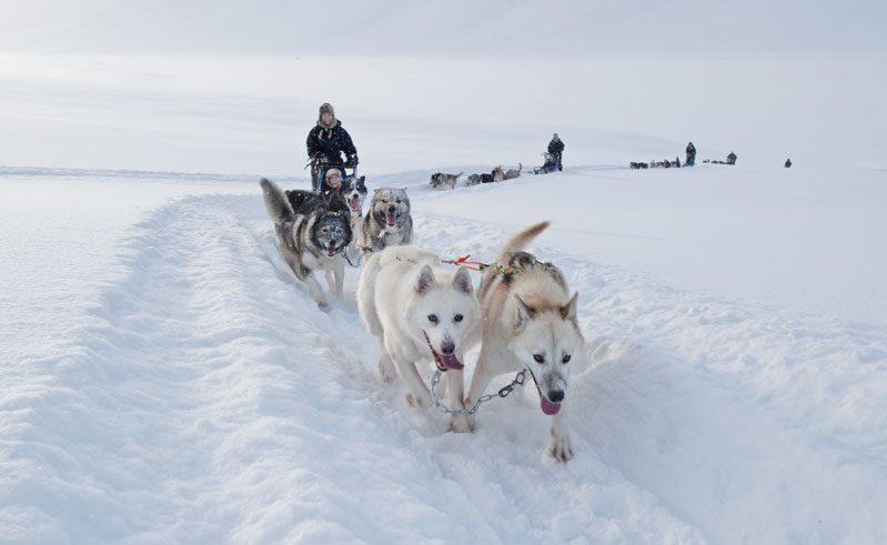 spitsbergen basecamp huskies running