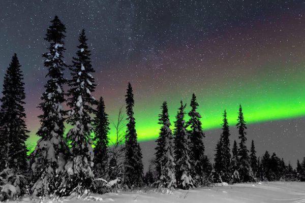 sweden lapland aurora over forest jw