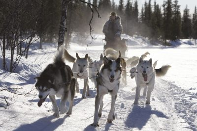 sweden lapland husky sledding rth