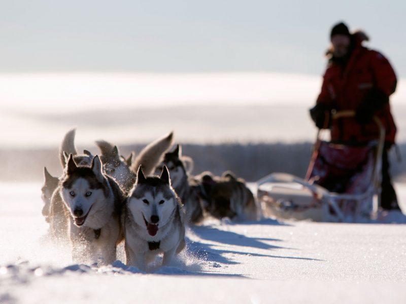 sweden lapland husky sledding vs