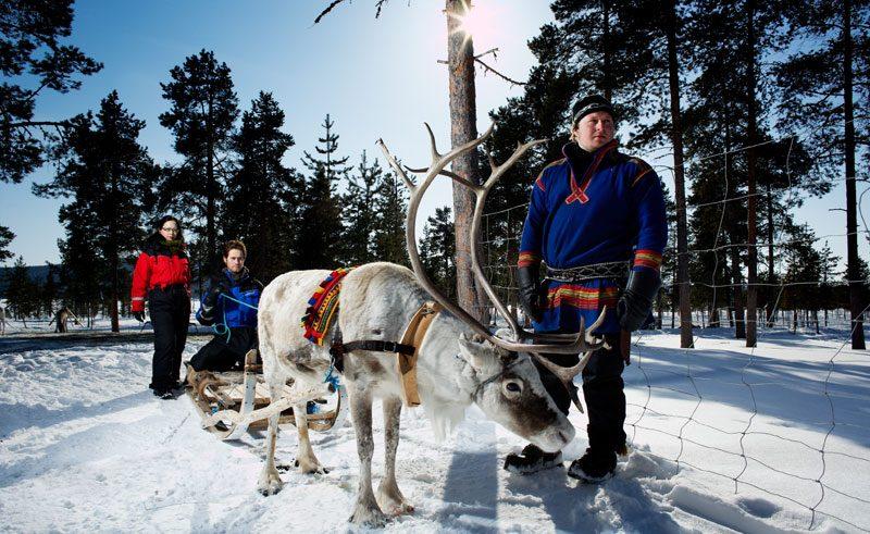 sweden lapland icehotel reindeer