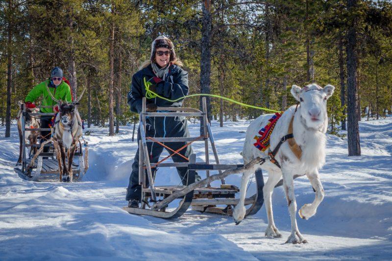 sweden lapland reindeer safari icehotel rth
