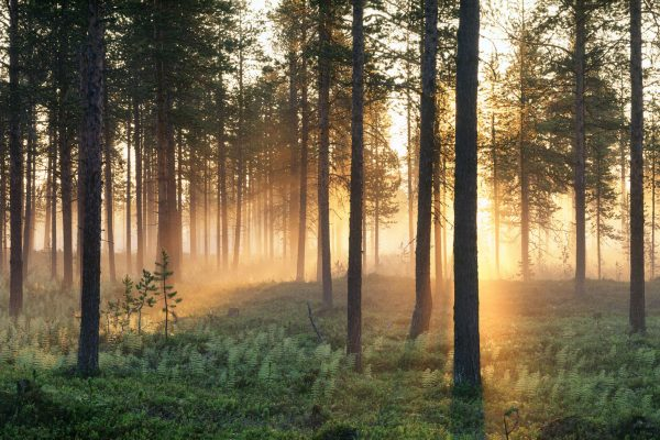 sweden varmland forests filtered sunlight vs