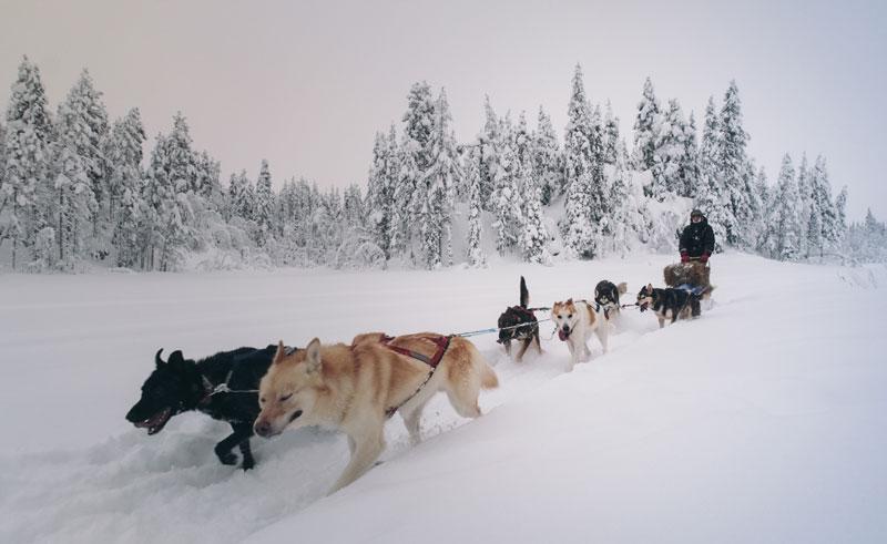 swedish lapland lannavaarra husky sledding aml