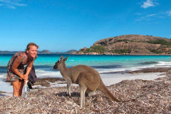 western australia esperance kangaroo on beach adstk m