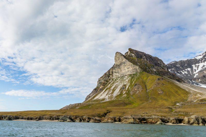 arctic spitsbergen alkornet summer istk