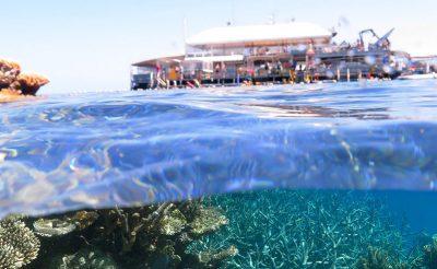 australia qld agincourt reef cruise