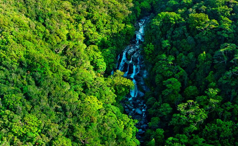 australia qld rainforest nautilus aviation scenic flight