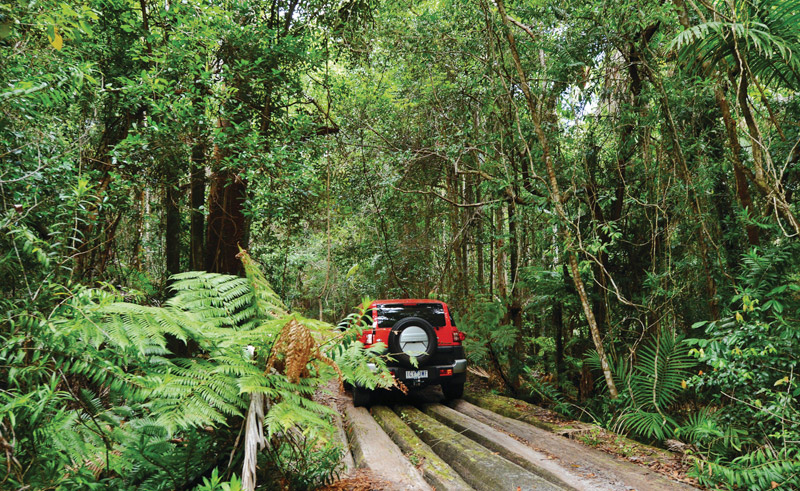 australia queensland daintree national park teq