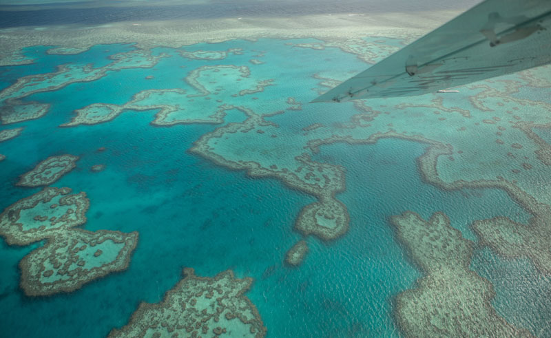 australia queensland seaplane flying over reef is