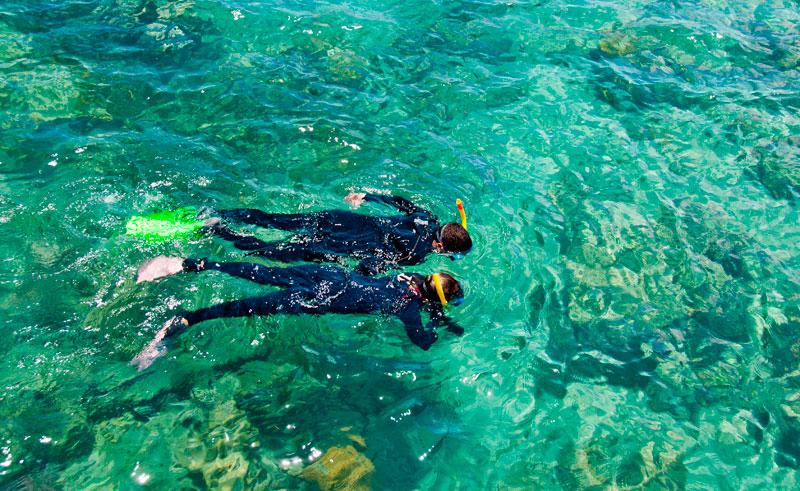 australia queensland snorkelling over reef as