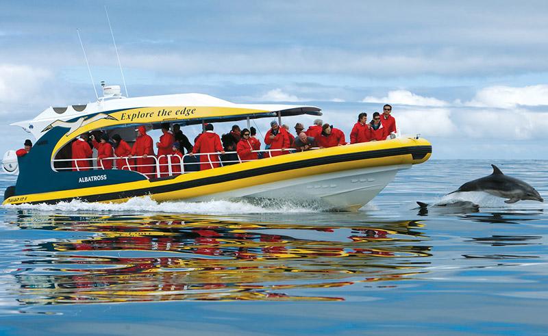 australia tasmania bruny island cruise dolphins